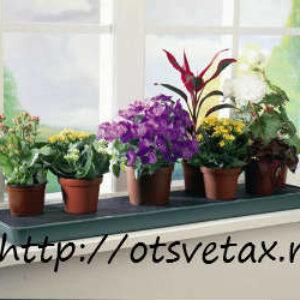 Основные группы комнатных растений