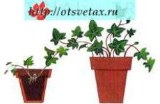 Какими способами размножают растения вегетативно