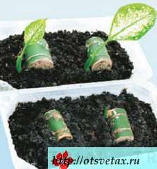 размножение растений стеблевыми черенками