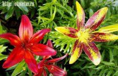 Какие цветы выбрать для посадки в саду