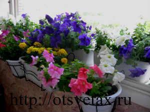лунный календарь для пересадки комнатных цветов на 2018
