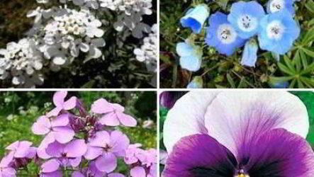 Чем цветы однолетники не похожи на многолетники, а в чем их сходство