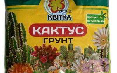 Грунт для кактусов — каким он должен быть? Купить или сделать своими руками?