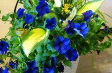 Зачем нам комнатные цветы и растения