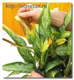 болезни комнатных растений +в картинках