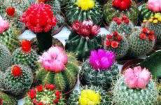 Как узнать и определить вид кактуса