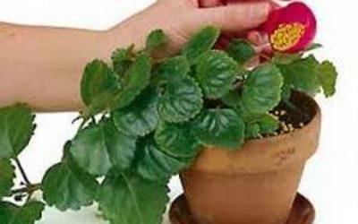 удобрения цветы