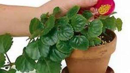 Как купить удобрения для цветов