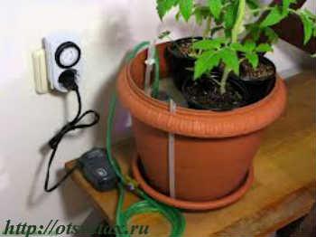 гидропоника комнатные растения