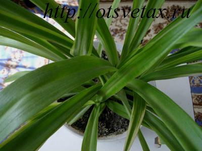 Полезные комнатные растения уход