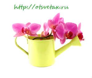 подкормка для орхидей видео
