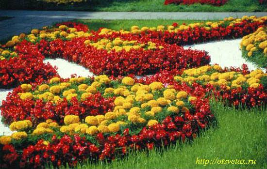 ковровые растения клумбы