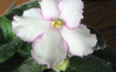 Комнатные цветы — мои цветущие любимцы