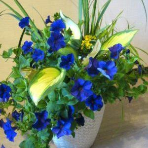 Цветы — отдушина моей жизни!