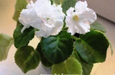 Онлайн голосование фотоконкурса «Цветы в моём доме» открыто! (продолжение)