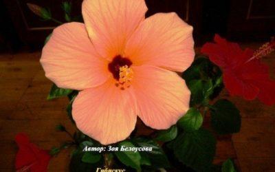 Онлайн голосование фотоконкурса «Цветы в моём доме» открыто!