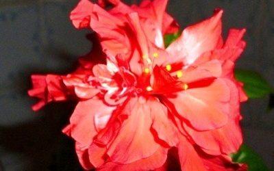 Онлайн голосование фотоконкурса «Цветы в моём доме» требует завершения!