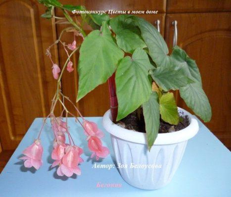 какие растения цветут