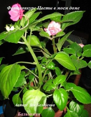 названия цветущих растений