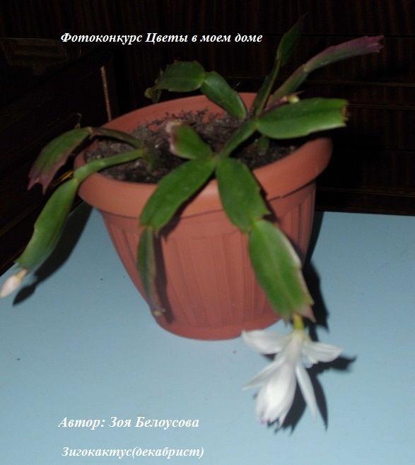 растения +в доме фото
