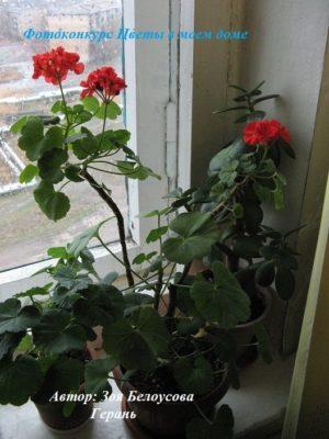 цветущие растения фото
