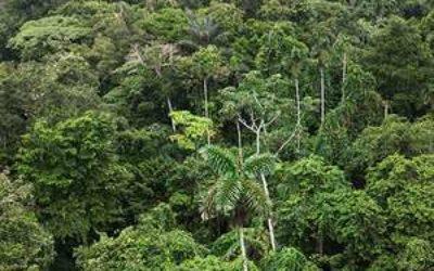 Amazonka-lesa
