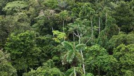 Тропические леса Амазонки являются домом для 16 000 видов деревьев