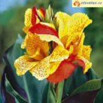 Какие луковичные цветы посадить весной, чтобы они цвели летом и осенью