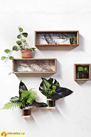 комнатные растения цены
