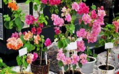 выставка комнатные цветы