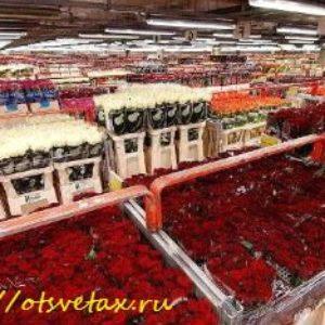 Комнатные цветы из Голландии