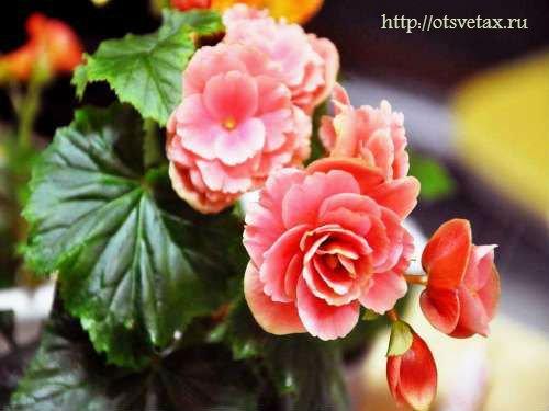 выставка комнатных цветов