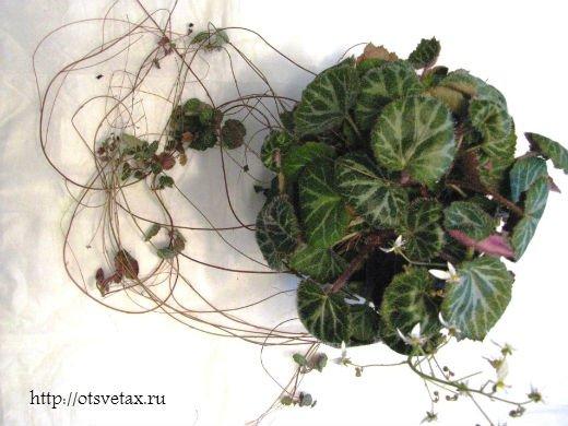 комнатные растения для водолея фото