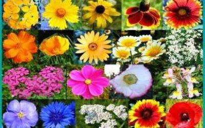 цветы почтой по россии