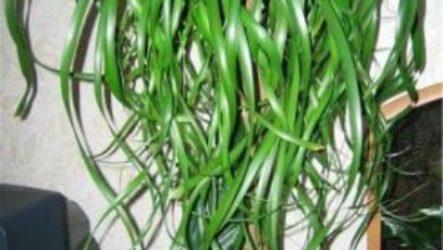 Растения Водолея комнатные, названия, фото, свойства