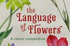Язык цветов — латынь. Как понять ботаническое название растения на латыни