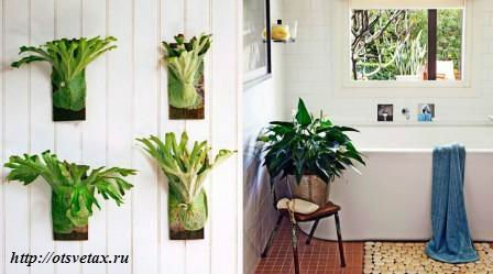 комнатные растения для ванной