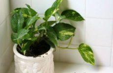 Лучшие растения для ванной