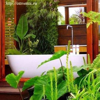 растения в ванную комнату