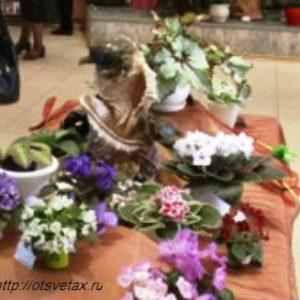 Выставка цветов открылась вчера в Сочи