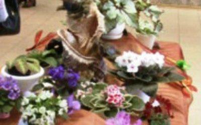 выставка цветов в Сочи