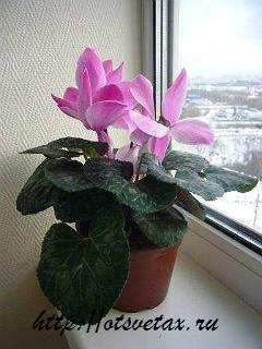 комнатное растение фото