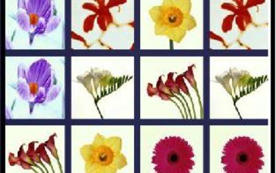 Найди пару одинаковых цветов