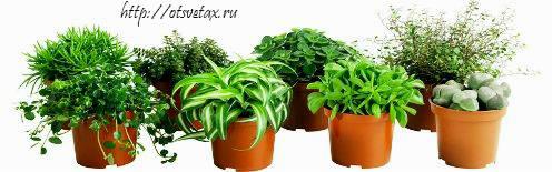 растения домашнии
