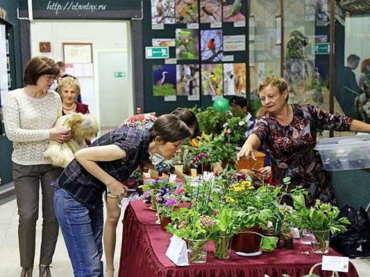 цветы 2015 выставка
