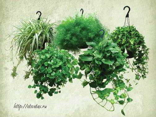 выбрать комнатное растение фото