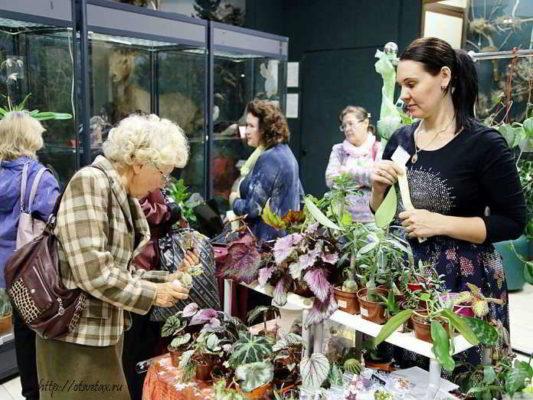 выставка цветов фото