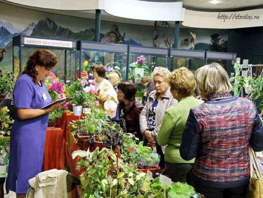 выставка цветов иркутск