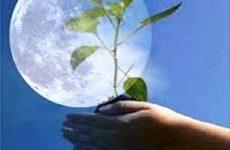 Лунный посевной календарь огородника на январь 2019 года