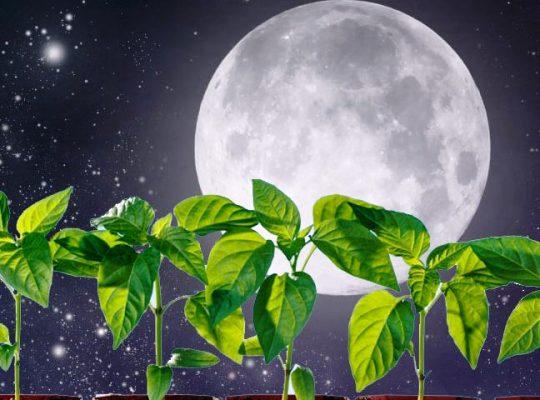 январский лунный посевной календарь 2019 года